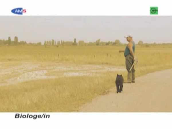 Biologe/Biologin