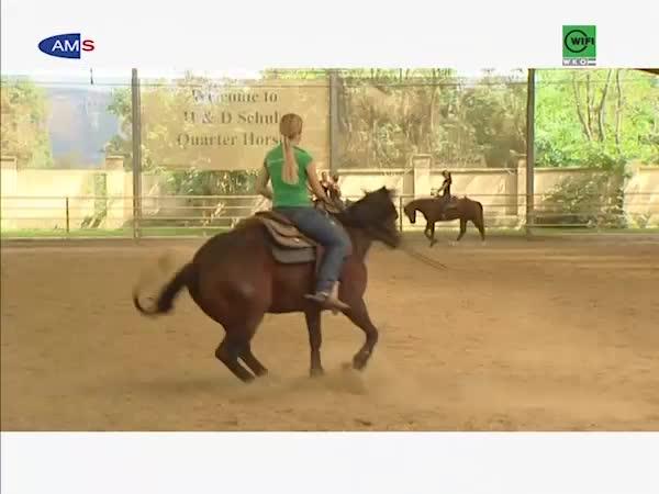 FacharbeiterIn Pferdewirtschaft